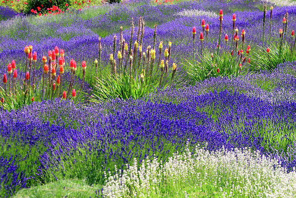 Floral Art Print featuring the photograph Lavender And Flowers Oh My by Debra Orlean