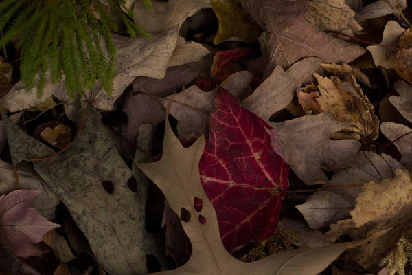 Leaf Leaves Autumn Fall Halloween Art Print featuring the photograph Leaf Collage by Brian Schultz
