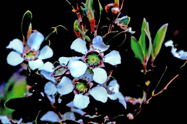 Lemon-scented Art Print featuring the photograph Lemon Scented Tea Tree by Miroslava Jurcik