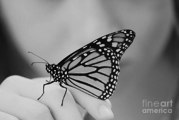 Butterfly Art Print featuring the photograph Let It Go by Aimelle