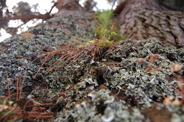 Lichen Art Print featuring the photograph Lichen Tower by Jean Booth