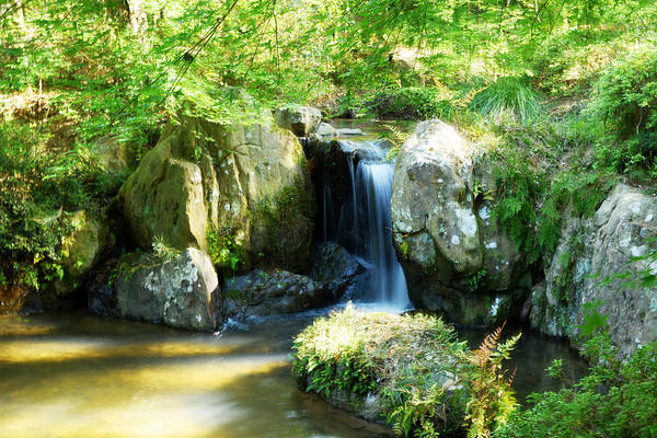 Waterfall Art Print featuring the photograph Light Through The Forest by Amburr Drury