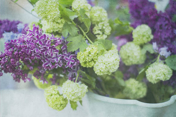Lilacs Art Print featuring the photograph Lilacs And Snowballs by Rebecca Cozart