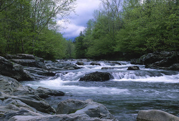 Great Smoky Mountains Art Print featuring the photograph Little Pigeon River by Sandra Bronstein