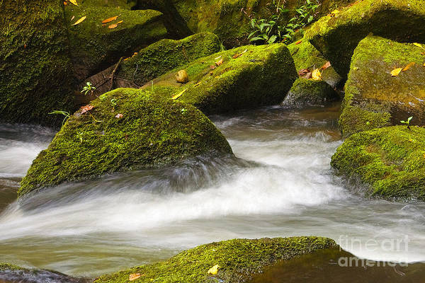 Living Art Print featuring the photograph Living Waters by Neil Doren