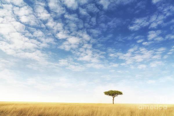 Mara Art Print featuring the photograph Lone Acacia Tree In The Masai Mara by Jane Rix