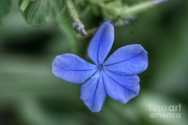 Flower Art Print featuring the photograph Lone Wildflower by Glenn Forman