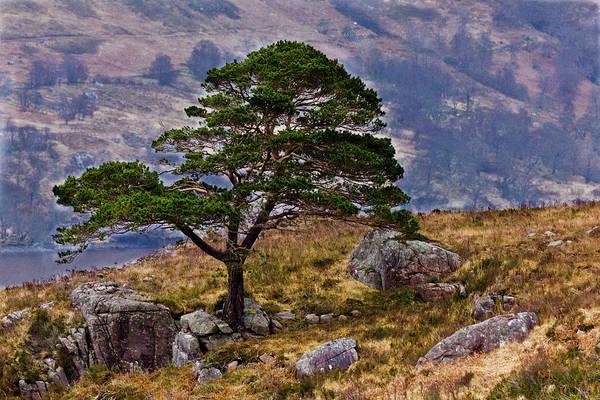 Landscape Art Print featuring the photograph Lonesome Pine by Derek Beattie