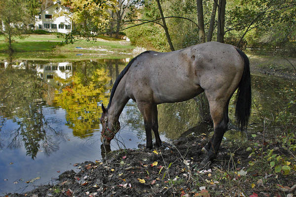 Horse Art Print featuring the photograph Long Drink by Jack Goldberg