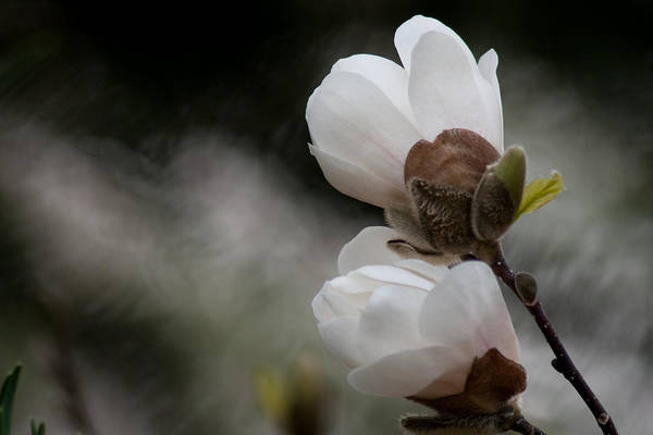 Bloom Art Print featuring the photograph Looking Upward by Craig Hosterman