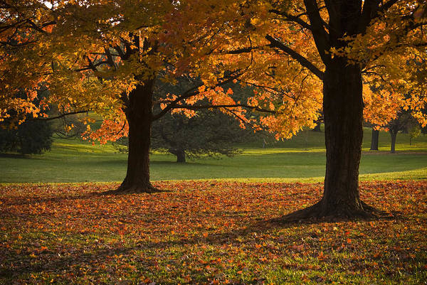 Seasons Art Print featuring the photograph Loose Park Maple Trees by Chad Davis