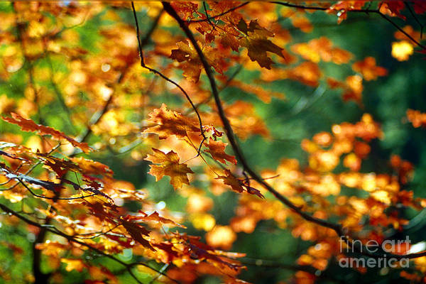 Fall Color Art Print featuring the photograph Lost In Leaves by Kathy McClure