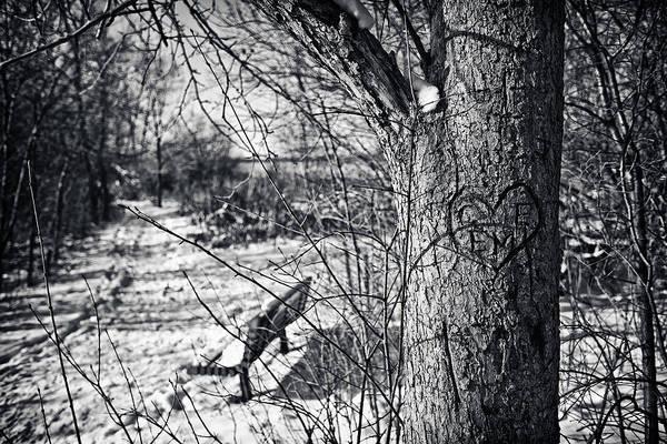 Cj Schmit Print featuring the photograph Love On A Tree by CJ Schmit