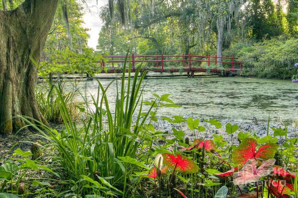 Magnolia Plantation Gardens Art Print featuring the photograph Magnolia Plantation Swamp Garden by Dustin K Ryan