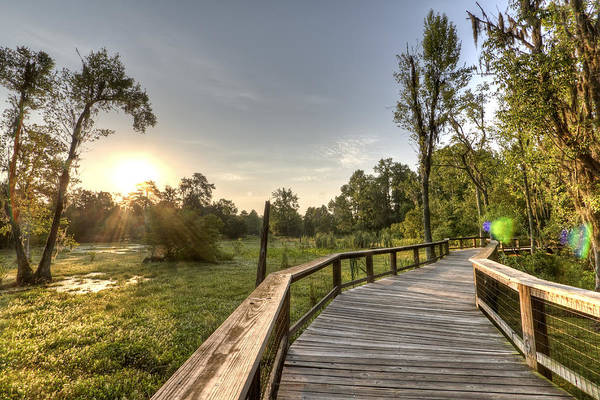 Magnolia Plantation Art Print featuring the photograph Magnolia Swamp Sunrise by Dustin K Ryan