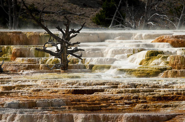 Mammoth Hot Springs Art Print featuring the photograph Mammoth Hot Springs Beauty by Chad Davis