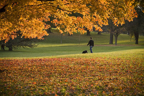 Park Art Print featuring the photograph Man In The Park by Chad Davis