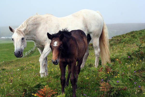 Horses Art Print featuring the photograph Mare And Colt by Joseph Gilbertie