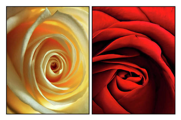 Rose Art Print featuring the photograph Matters Of The Heart - Diptych by Steve Harrington