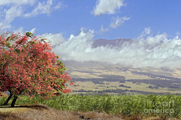 Afternoon Art Print featuring the photograph Maui Science City by Dave Fleetham - Printscapes