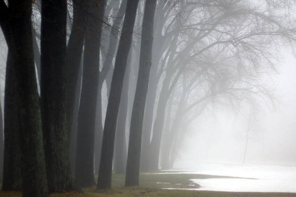 Trees Art Print featuring the photograph Misty Moments by Linda Mishler