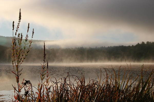 Misty Morning Art Print featuring the photograph Misty Morning by Linda Russell