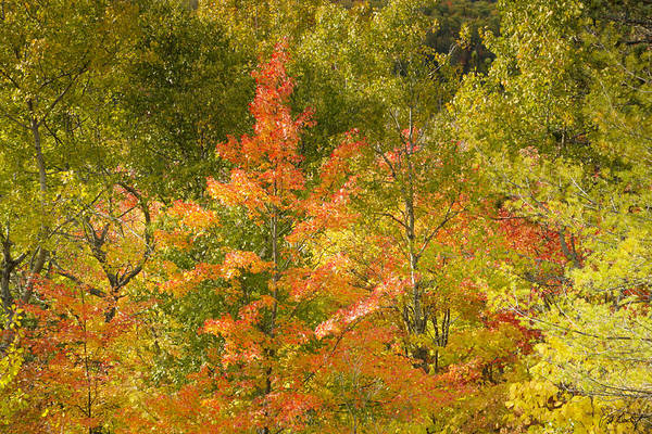 Tree Art Print featuring the photograph Mixed Autumn by Phill Doherty