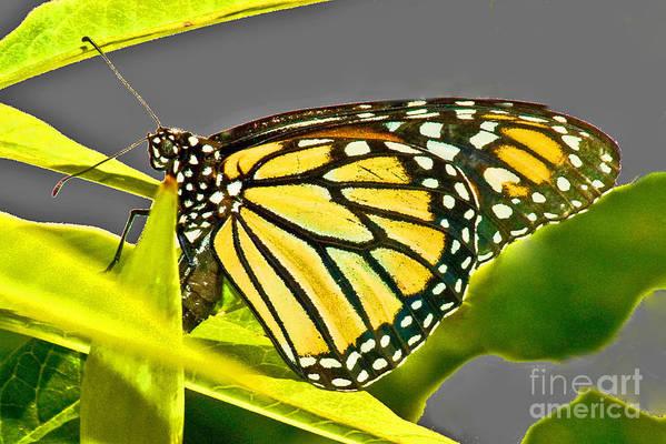 Butterfly Art Print featuring the photograph Monarch Butterfly by Allan Einhorn