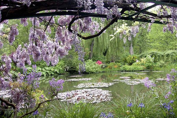 Monet Art Print featuring the photograph Monet Water Garden by Nancy Sisco