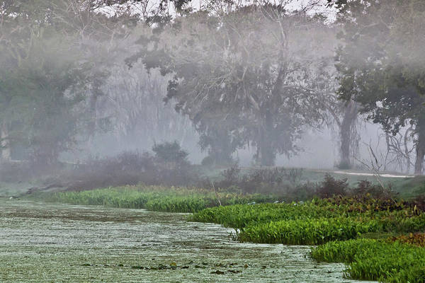 Landscape Art Print featuring the photograph Morning Fog At Brazos Bend by James Woody