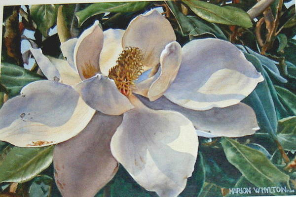 Flower Art Print featuring the painting Morning Magnolia by Marion Hylton