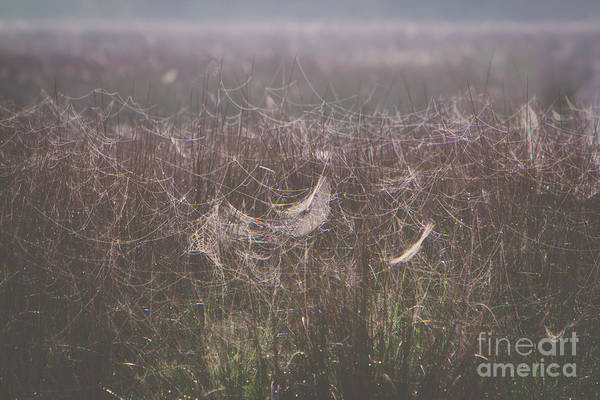 Web Art Print featuring the photograph Morning Webs by Joan McCool