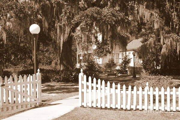 Picket Fence Art Print featuring the photograph Mossy Live Oak And Picket Fence by Carol Groenen
