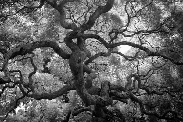 Tree Art Print featuring the photograph Motivations by Mitch Cat