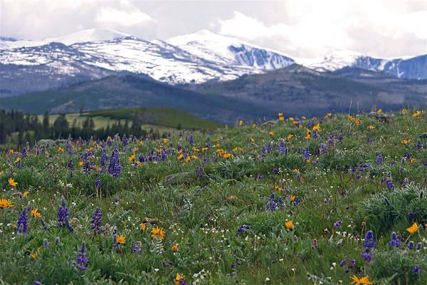 Landscape Art Print featuring the photograph Mountain Wildfowers by MH Ramona Swift