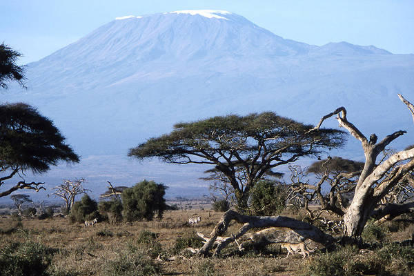 Worsley Art Print featuring the photograph Mt.kilimanjaro by Wade Worsley