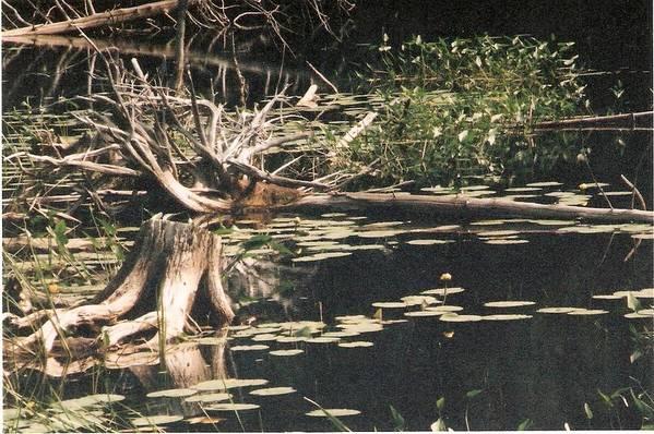 Lake Art Print featuring the photograph Mud Lake Landscape - Photograph by Jackie Mueller-Jones