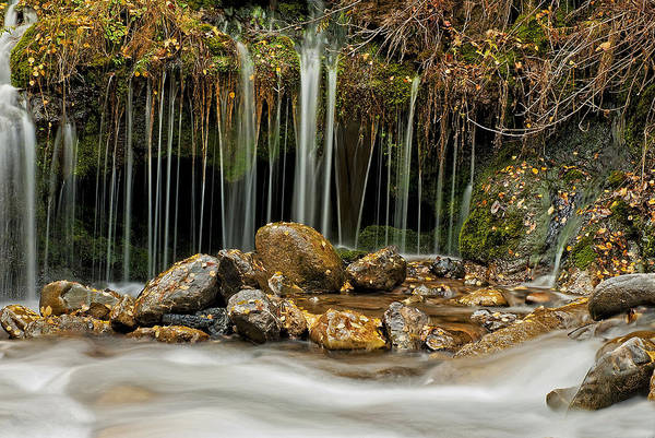 Water Art Print featuring the photograph Mystery Stream by Scott Read