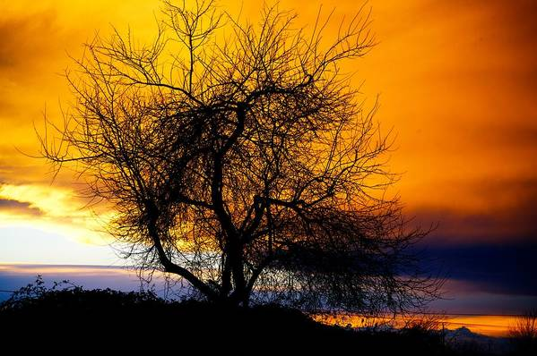 Tree Art Print featuring the photograph Naked Tree by Paul Kloschinsky