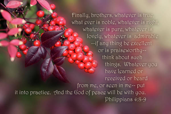 Scripture Art Print featuring the photograph Nandina Berries Phil.4 V 8-9 by Linda Phelps