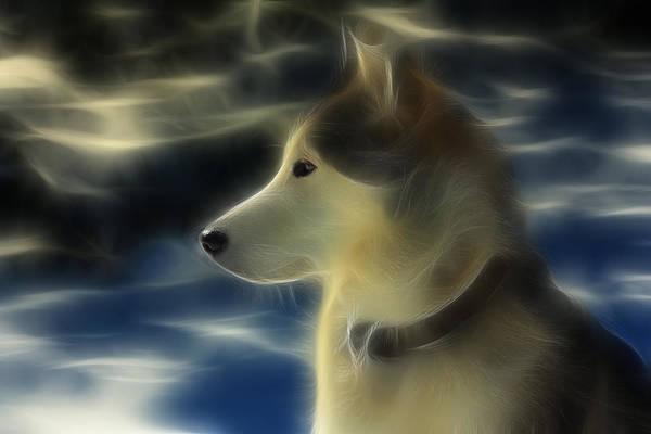Dog Art Print featuring the photograph Nanuk Husky Fractal by Marjorie Imbeau
