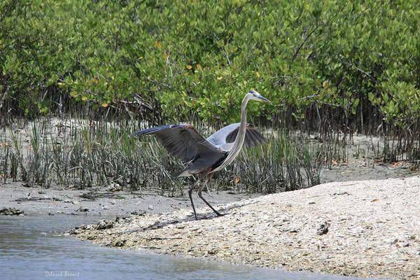 Blue Heron Art Print featuring the photograph Nature In Florida by Deborah Benoit