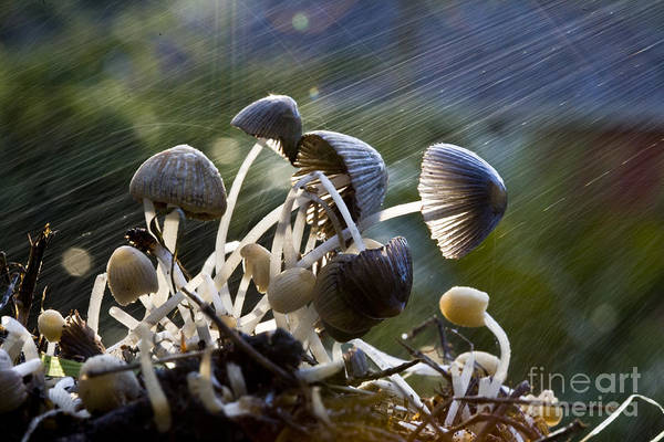 Mushrooms Rain Showers Umbrellas Nature Fungi Art Print featuring the photograph Nature by Sheila Smart Fine Art Photography