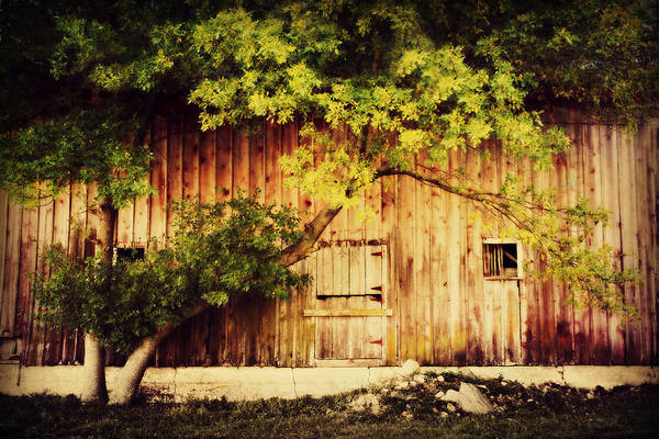 Barn Art Print featuring the photograph Natures Awning by Julie Hamilton