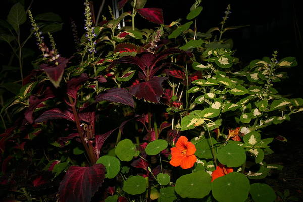 Flower's Art Print featuring the photograph Night Flower's by Kevin Dunham