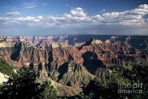 Grand Canyon; National Parks Art Print featuring the photograph North Rim by Kathy McClure