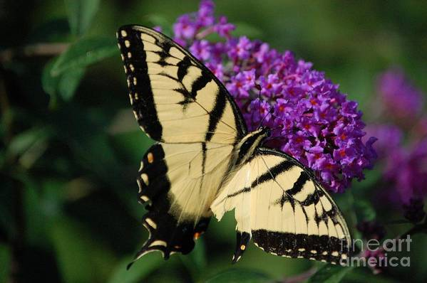 Butterfly Art Print featuring the photograph Nothing Is Perfect by Debbi Granruth