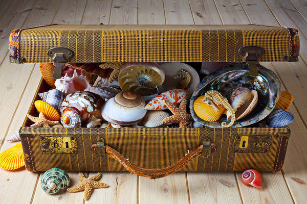 Suitcase Full Sea Shells Travel Art Print featuring the photograph Old Suitcase Full Of Sea Shells by Garry Gay
