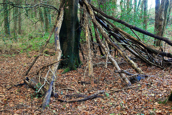 Woodlands/hide. Art Print featuring the photograph Old Woodland Hide. by Phil Panton