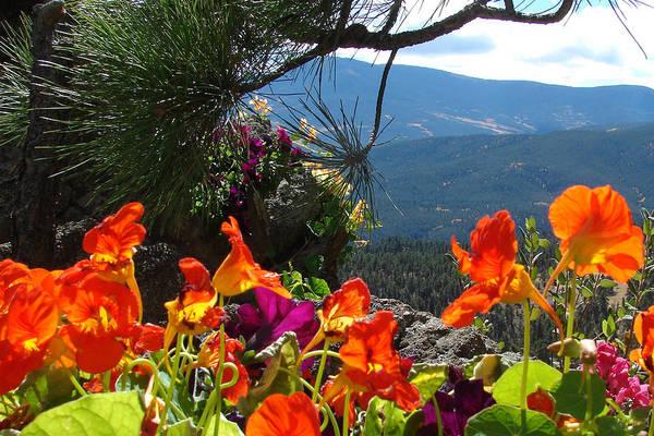Flowers Art Print featuring the photograph Orange Nasturtium Against Mountains by Jody Neumann